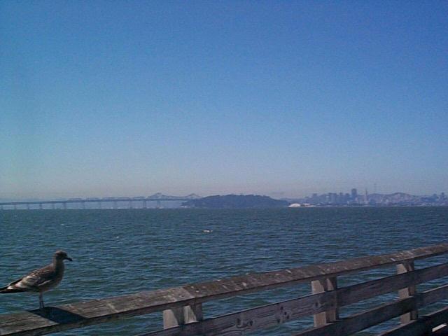 view images. [Berkeley Pier] [Berkeley Pier view]. Views of Berkeley from the hills on