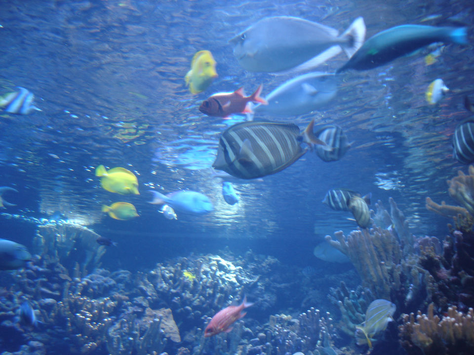 Tropical fish hawaii tropical fish 2017 fish tank for Fishing in maui